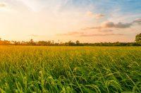 CB Insights:2016年农业科技初创企业共获得2.83亿美元投资