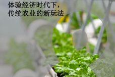 都市农业体验经济时代下_000001.jpg