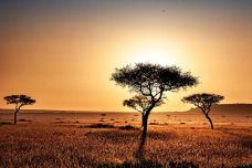 Kenyan-Savanna.jpeg